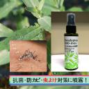 eucayptus