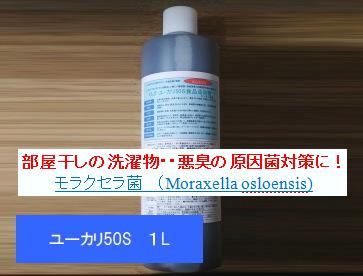 pro_yukari50_moraxella